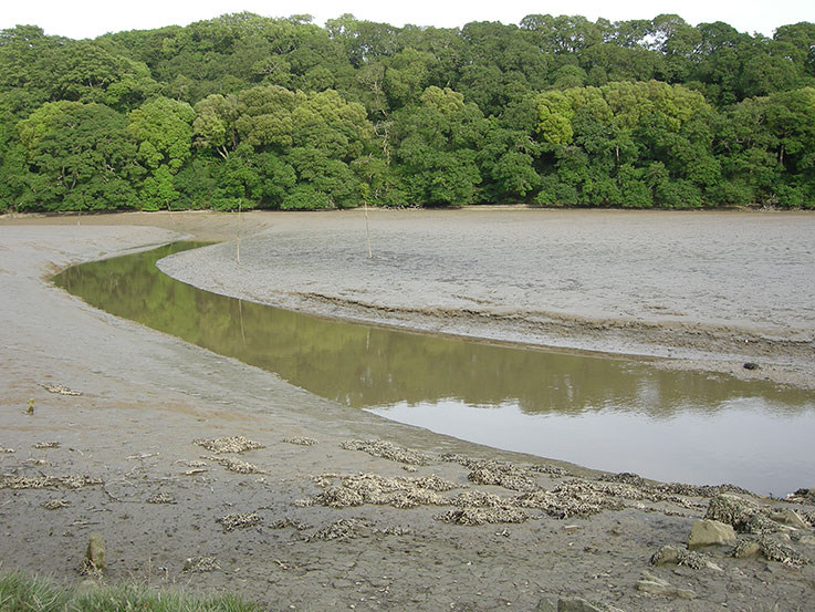 Tresillian River at low tide April 2015 Photo © Keith Littlejohns