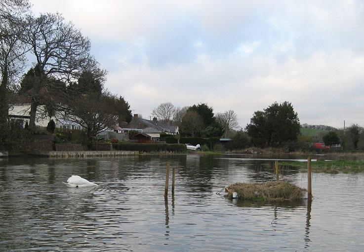 swans-2016-2